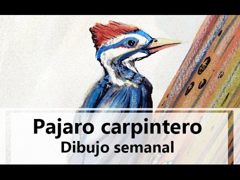 Pajaro Carpintero Dibujo Semanal Youtube