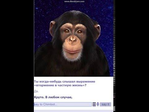 скачать игру чат бот обезьяна img-1