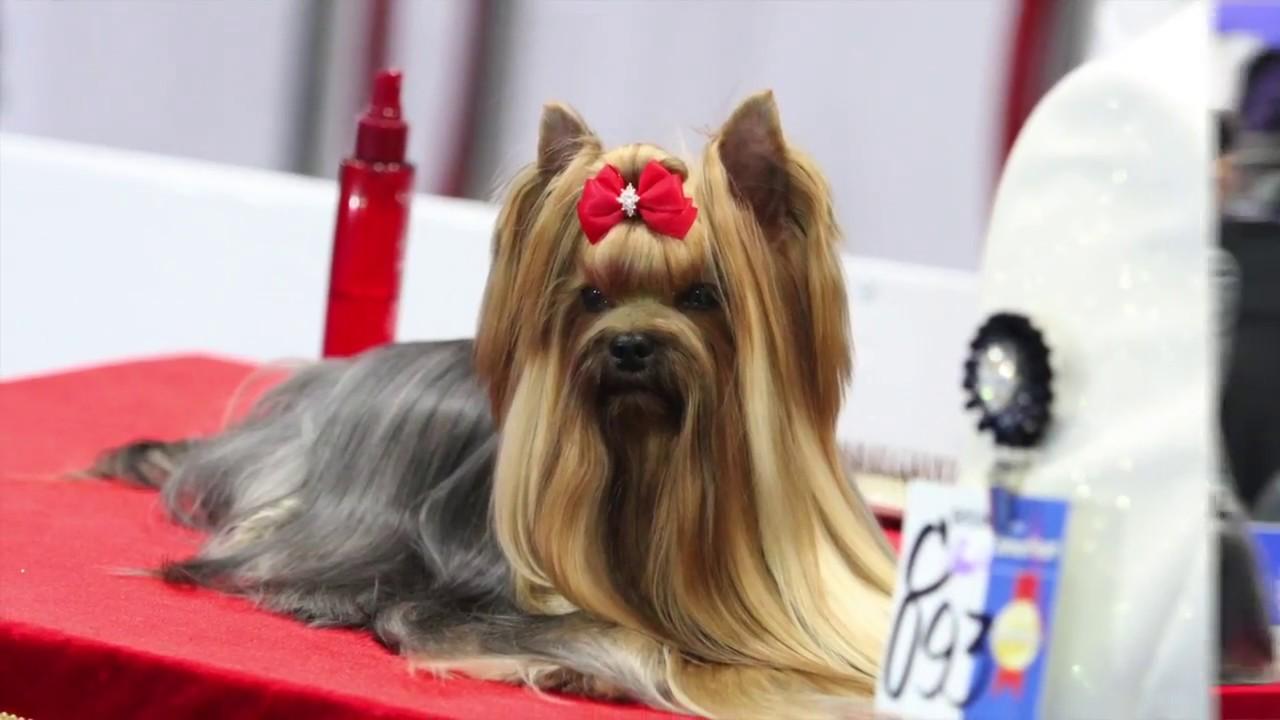 Five Most Popular Dog Breeds in Thailand