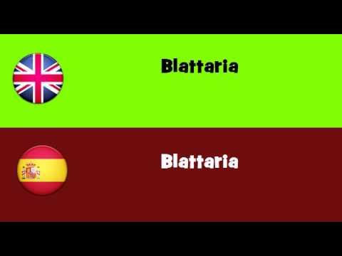 FROM ENGLISH TO SPANISH = Blattaria