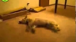 Собаке приснился страшный сон