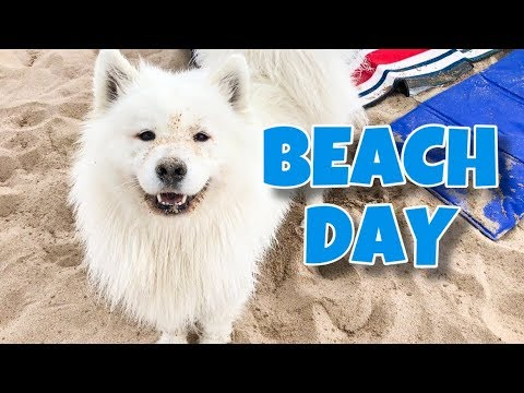 My Dog Goes To The Beach!