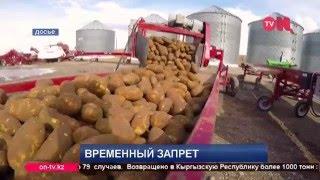 видео Казахстан запретил ввоз картофеля из Кыргызстана