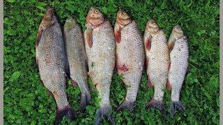 секреты рыбалки ловля маховой удочкой летом на реке РСН _ Fishing rod centrifugal summer(отличный шнур-http://ali.pub/1zh9a зарабатывай на хобби http://goo.gl/RiXrc8 Все самое интересное ТУТ https://www.youtube.com/user/feederpoplavok..., 2014-03-19T22:16:41.000Z)