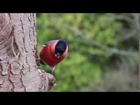 Natural Birds