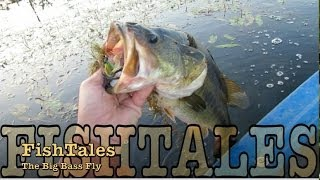 The Big Bass Fly (HD version)
