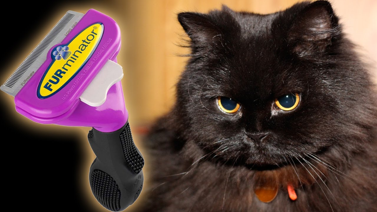 Furminator For Long Haired Cats Uk