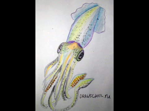рисунок кальмара