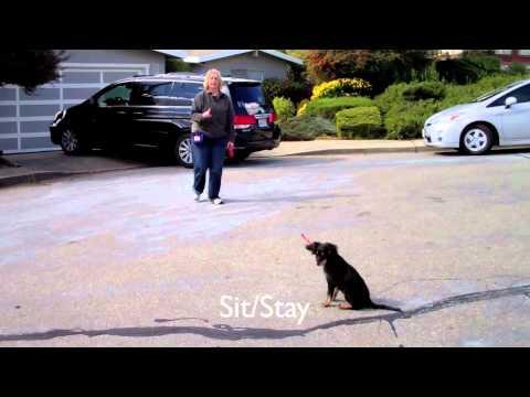 Dog Training Castro Valley