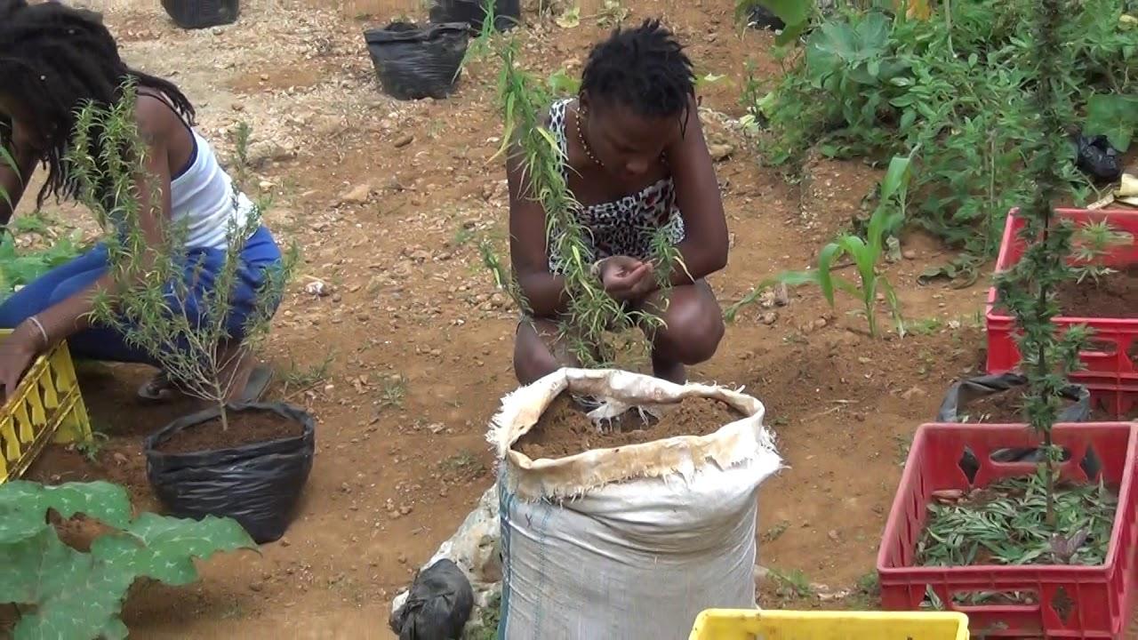 sensi and sativa in their sacred garden - YouTube