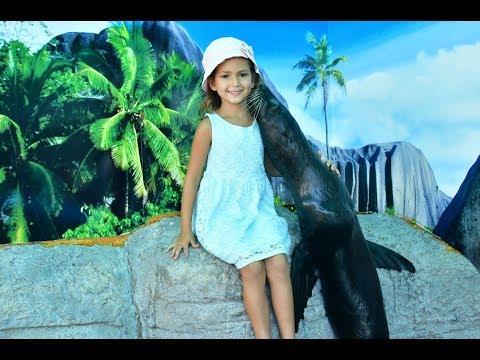 ELİF VE FOK BALIĞI, elif  akvaryumda fok balığı besliyor,çok sevimli oldular, çocuk videosu