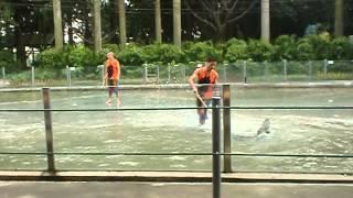 Guangzhou Crocodile Park 1/4