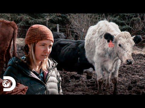 Ellas hacen el trabajo duro en la hacienda | Alaska: La últi