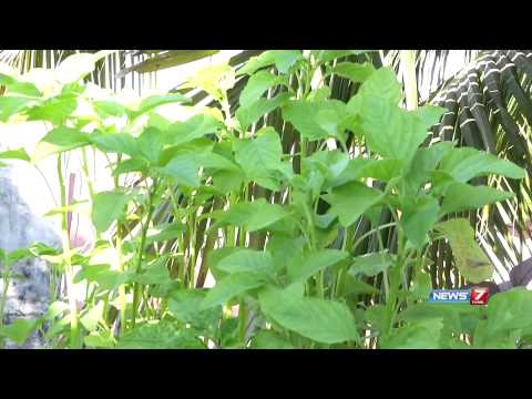 Harvest Fresh Greens on your Terrace Garden | Poovali | News7 Tamil