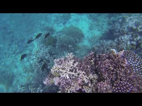 Vanuatu - Snorkeling at Hideaway Island - Part 2