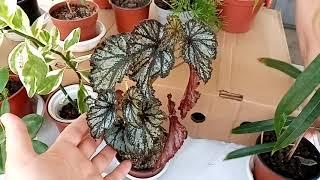Комнатные растения и не только на местном рынке.
