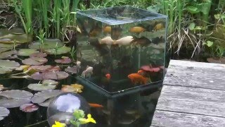 Building a FishTower in the Pond