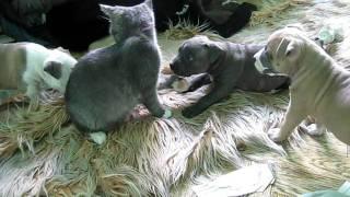 видео Нужно ли заниматься воспитанием кошки?