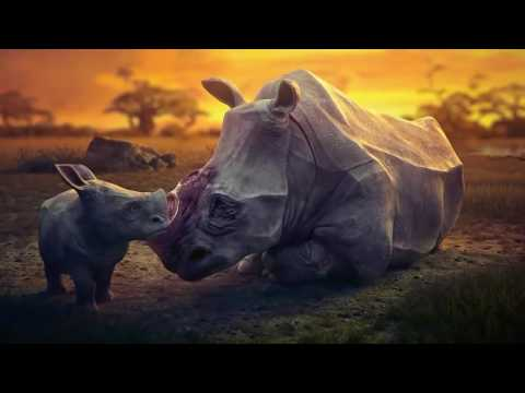 Sad Animation - The Animals Life