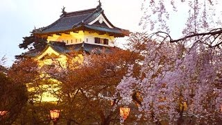 弘前城の満開の枝垂れ桜と岩木山