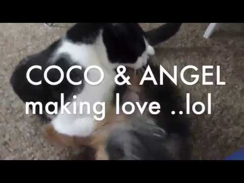 Coco-Dea and Angel making love for the first time :)