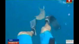 Американський дайвер зняв напад акули і вижив