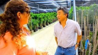 Commercial Horticulture in Miami-Dade County: Ornamental plants and the nursery industry