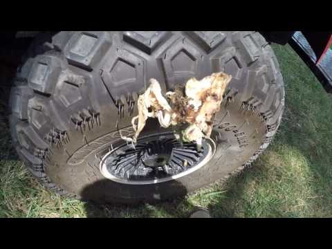 fish-punctures-golf-cart-tire!!
