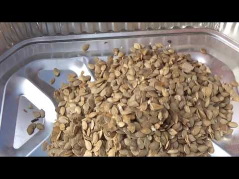 SQUASH SEED - EASY CLEANING HOW TO DO IT (OAG 2016)