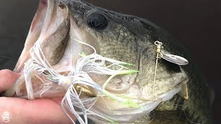 Catching Chunky Bass On Spinnerbaits, Crankbaits, and Jigs!