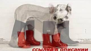 Авито продажа обуви для собак волгоград