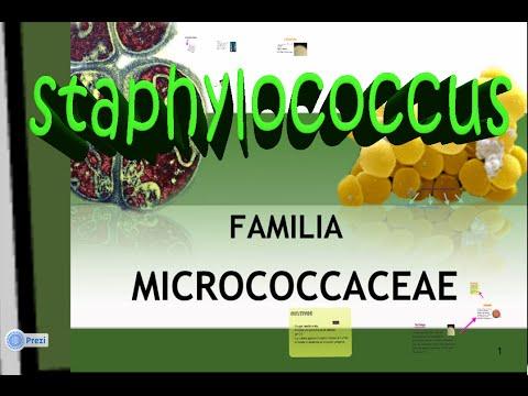Micrococcaceae: Staphylococcus aureus