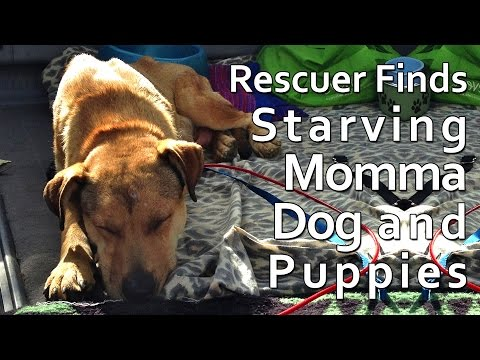 Rescuer Finds Starving Momma Dog and Her Puppies In Massive Quarry