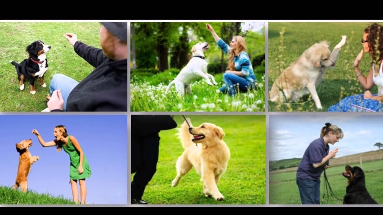 Image result for online dog trainer