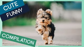 Yorkshire Terrier Compilation: Cute Puppies, Funny Dogs & Tricks
