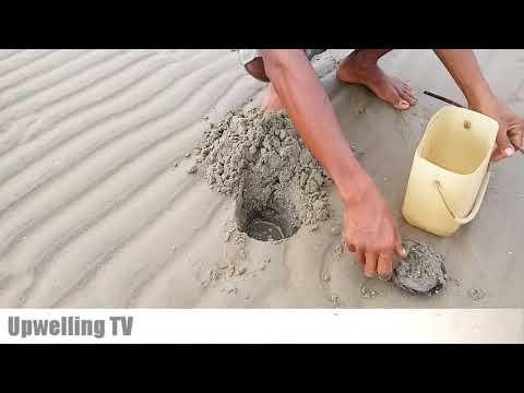 Mantap! Cari cacing laut untuk umpan mancing