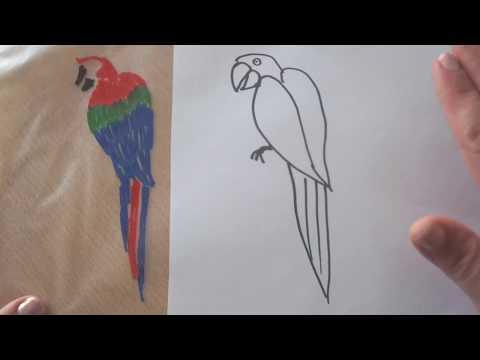 Papagei malen und ausmalen