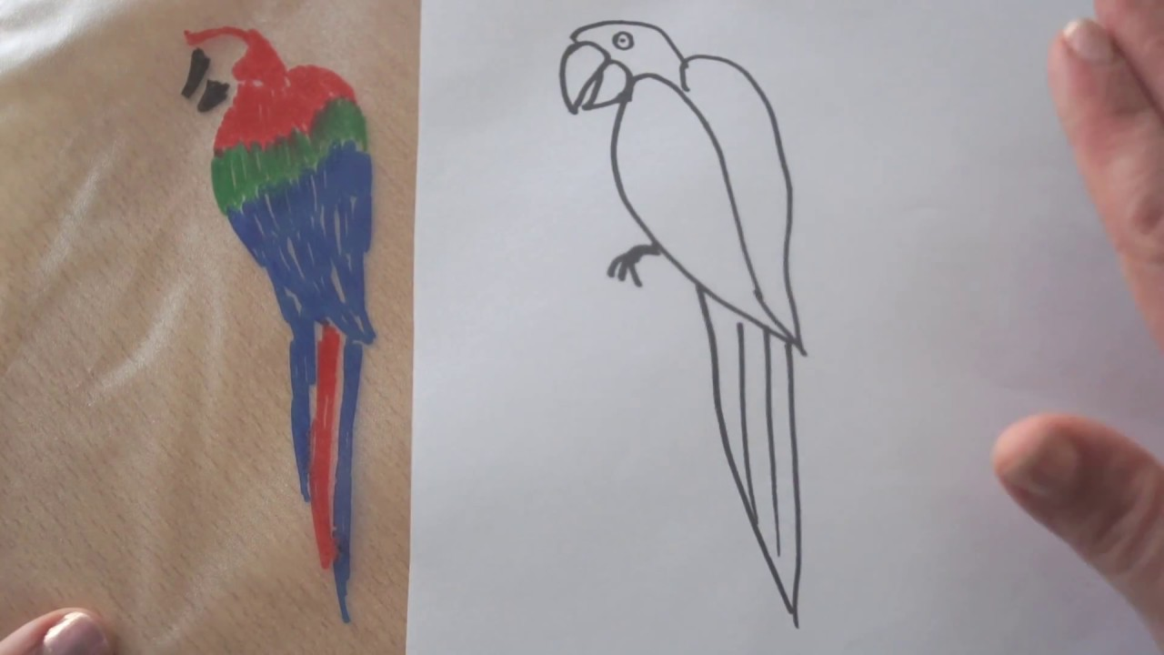 Papagei Malen Und Ausmalen How To Draw And Color A Parrot Kak