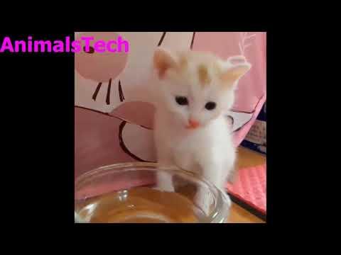 Funny animal videos | Funny Pet Videos