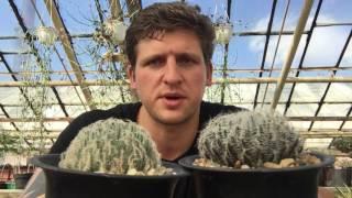 Хавортия (Haworthia) - удивительно разнообразный род суккулентов.