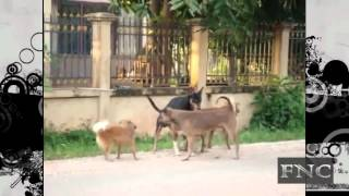 Dogs Mating Group Compilation HD