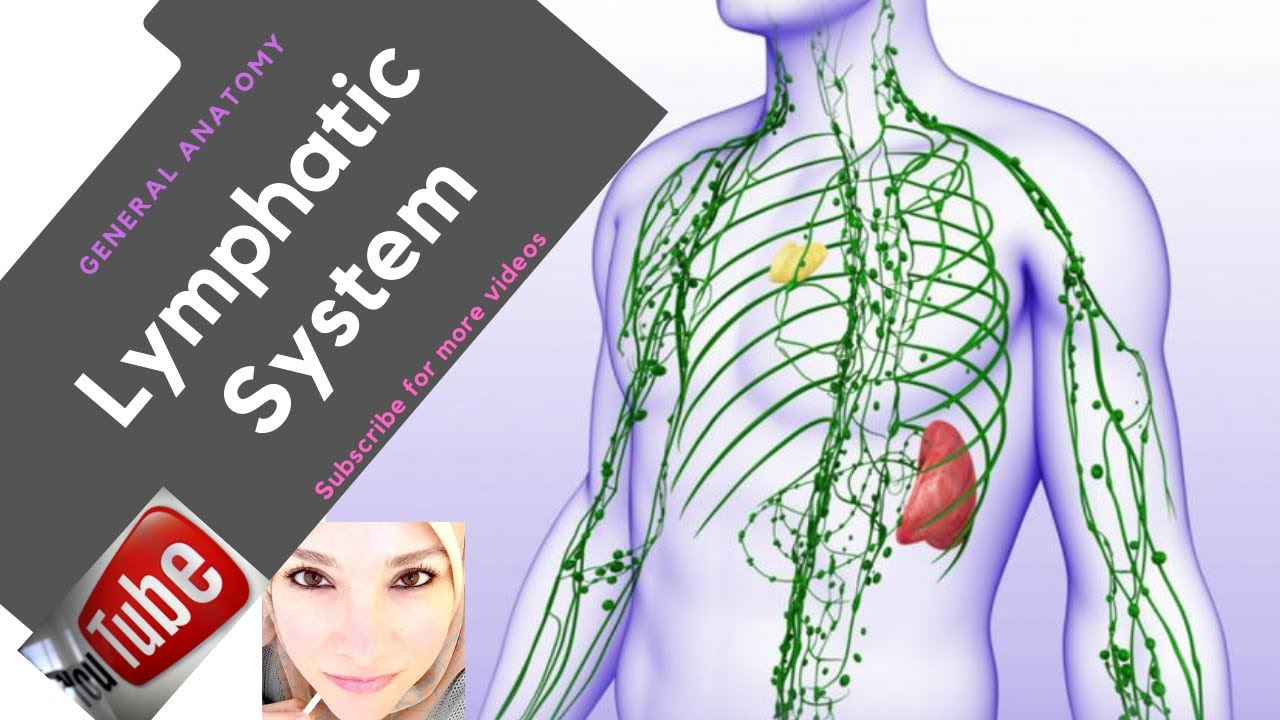 General anatomy - The Lymphatic System