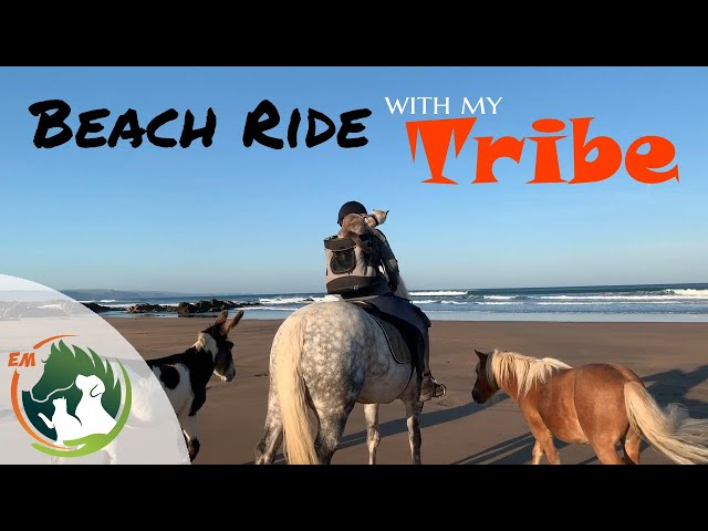 A Beach Ride with My Tribe - |Pony |Donkey |Shetland |Cat |Dog