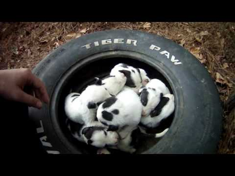 Thumbnail: Mother and 9 puppies at dead end street. Macon bibb Animal welfare