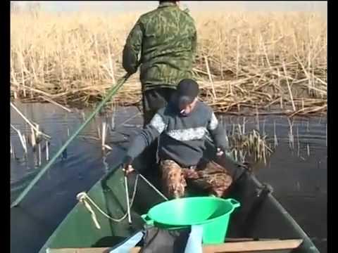 как поймать карася во время нереста видео