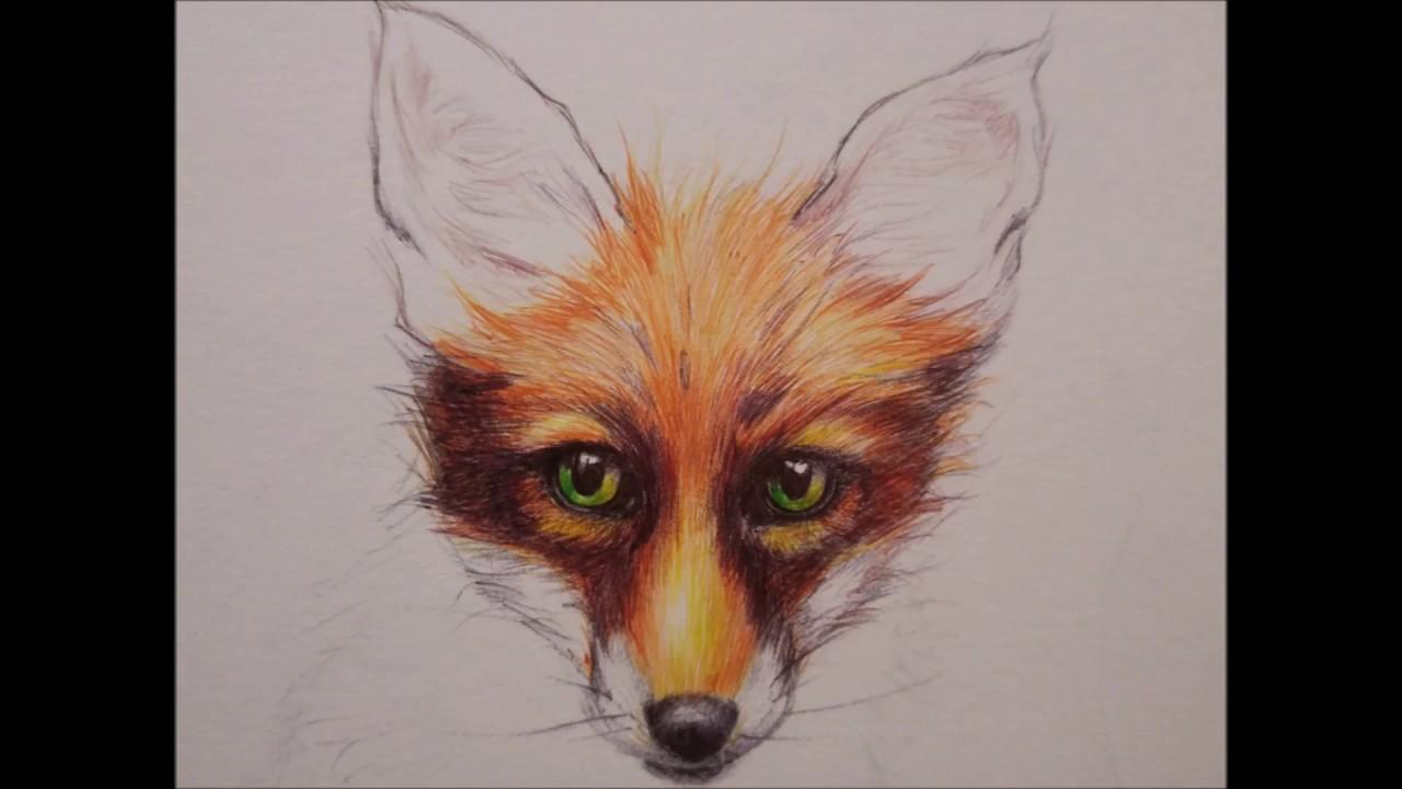 Dessin renard stylo bille goupiland youtube - Animal a dessiner ...