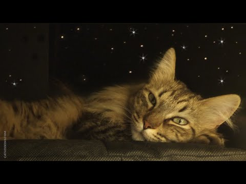 How to Make a Starry Sky Cat Bed