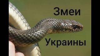 Змеи Украины / Snakes of Ukraine