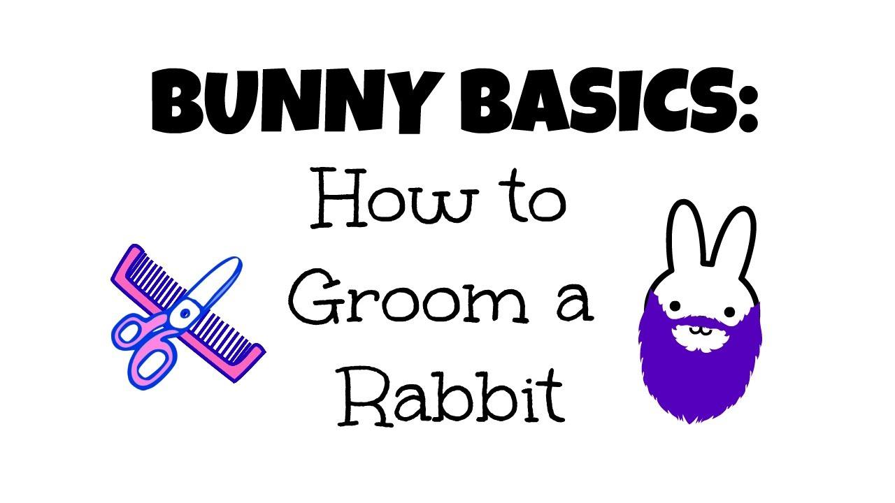 Bunny Basics: How To Groom A Rabbit