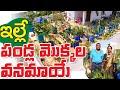 Fruit Plants Roof Garden || 1200 చ.అ. పెద్ద పండ్ల మొక్కల మిద్దెతోట || K Balamani